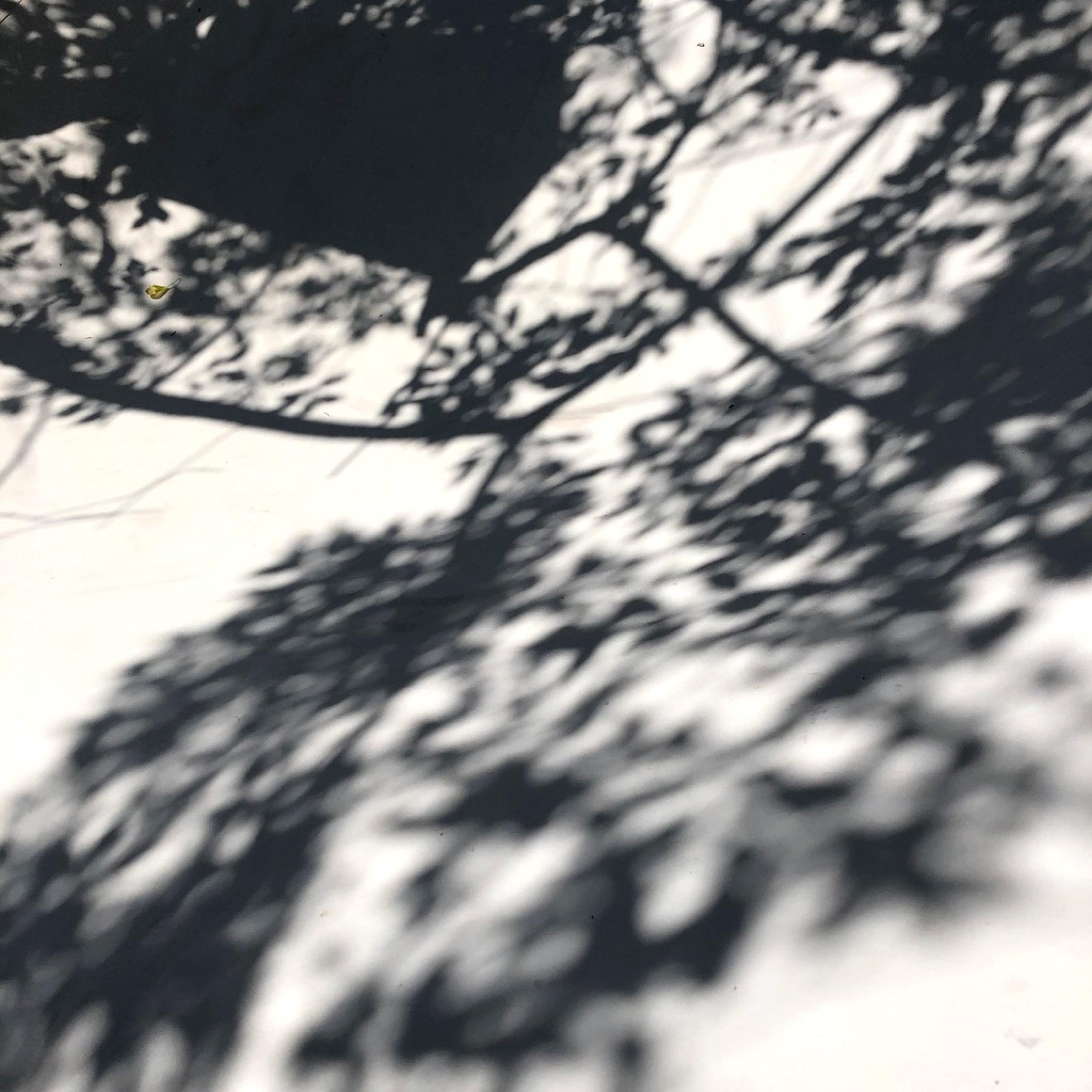 Image-Verzamel-4